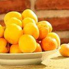Абрикос Блюда из фруктов